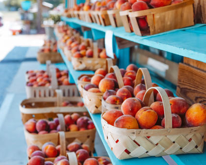 The Peach Tree Orchard