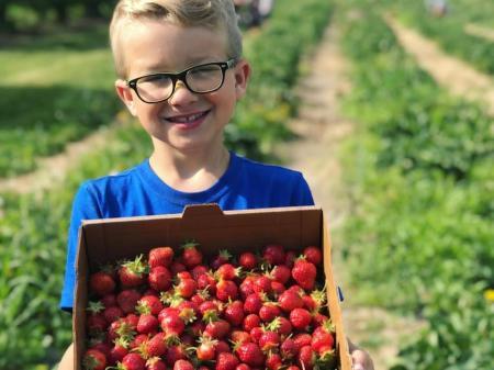 U-pick Strawberries at Beasley's Orchard