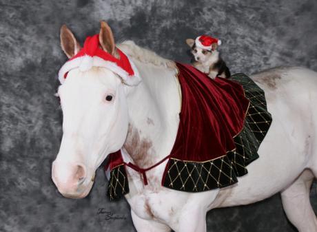 Cowboy Christmas - MSU Pavilion