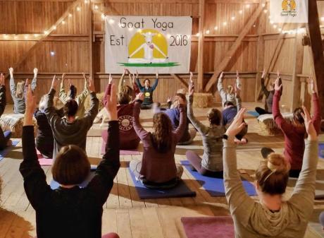 Goat Yoga MI