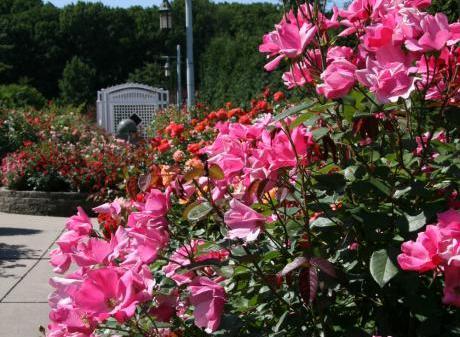 MSU Spring Plant Show