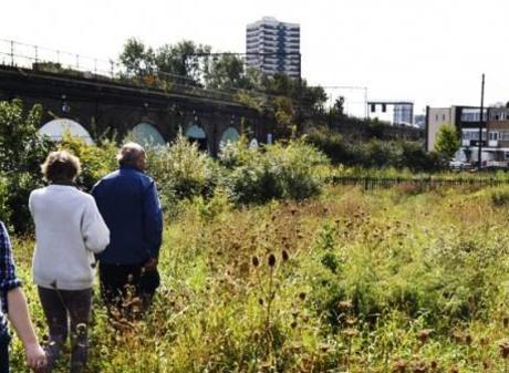 WyldWalkin' Urban Foraging