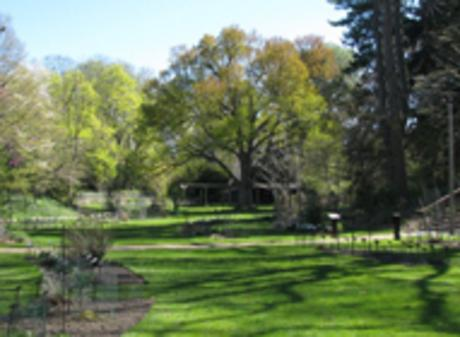 Beal Gardens: Salad Days: The Edible Raw Greens of Spring