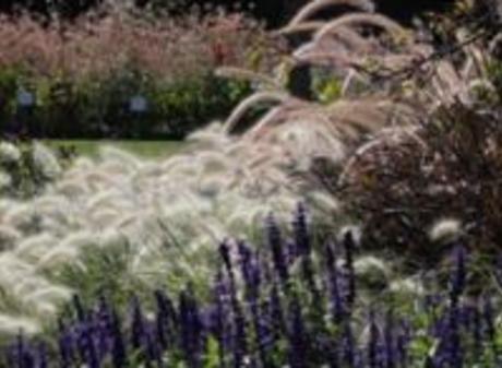 MSU Horticulture Gardens