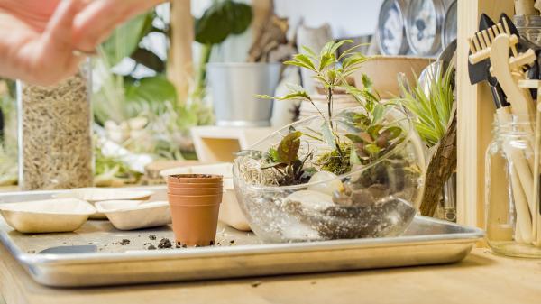 True Leaf Studio Terrarium