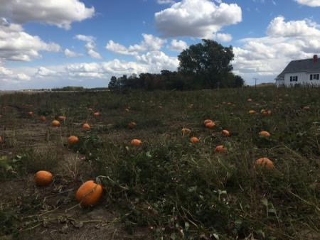 Alexander Farms pumpkin patch
