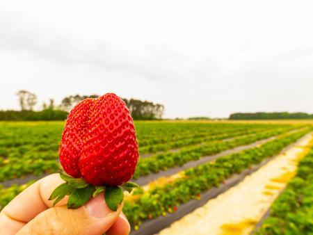 Picking berries at WDW Farm in Princeton.