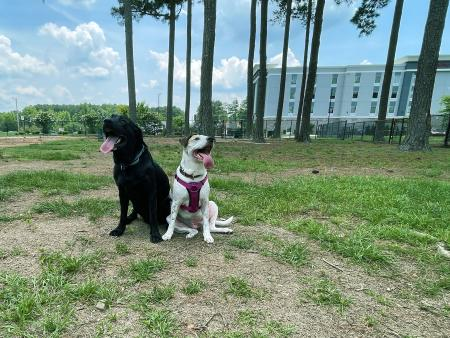 Benson is dog friendly with the 3-acre dog park adjacent to the Hampton Inn.