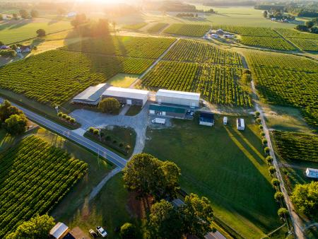 Aerial drone shot of Hinnant Vineyards in Pine Level, NC.