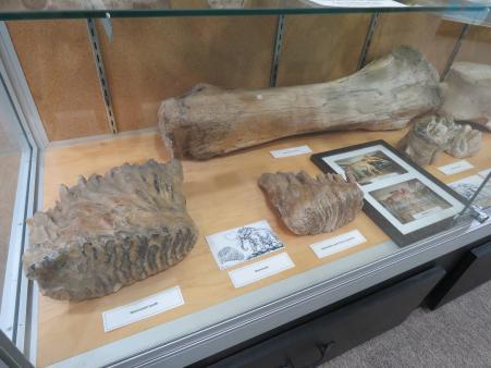 mammoth bones museum