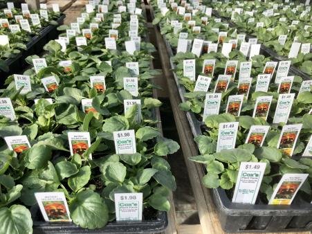Cox's Plant Farm has all sort of plants that are ready to plant in your garden.