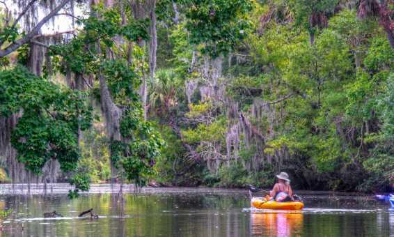 Kayak Spruce Creek Tour