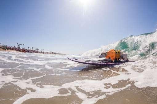 Surf City Surf Dog