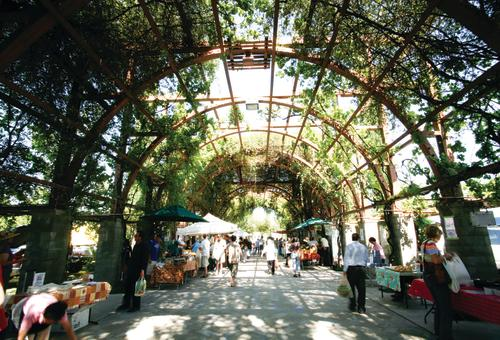 Farmers Market under canopy covered vines