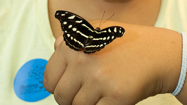 A butterfly on a child
