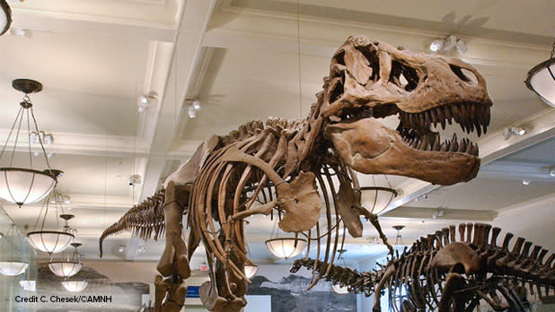 T. Rex at American Museum of Natural History