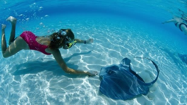 A girl swims near a stingray
