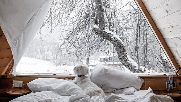 A white dog lies in bed looking through a window at a snowy landscape