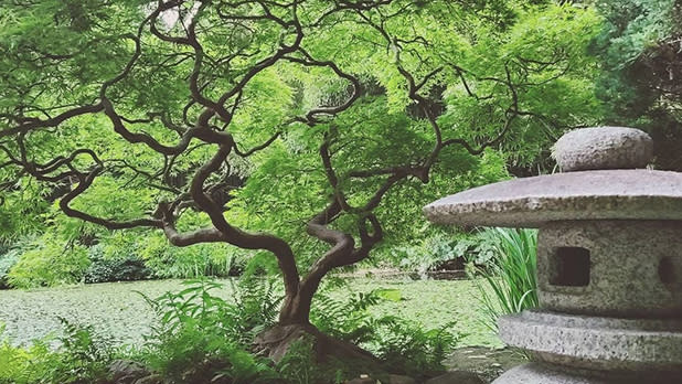 Japanese tree and stone sculpture