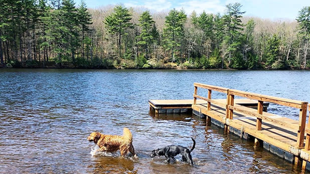 Two dogs in the water next to a dock
