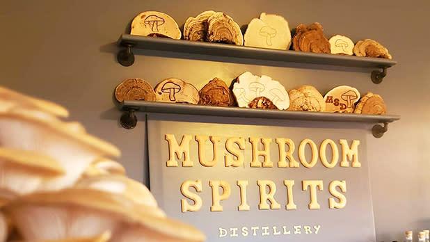 mushroomspirits_@mushroomspirits-Instagram_618x348