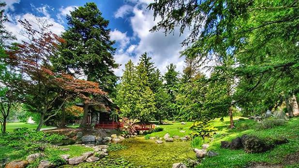 Lush greenery at Sonnenberg Garden