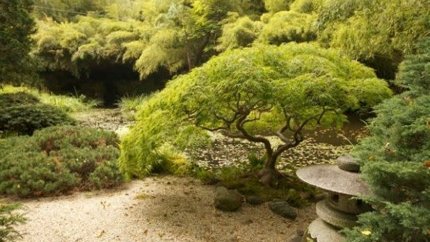 Shrubbery in a Japanese garden