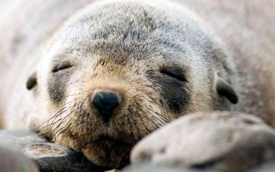 Close Up Fur Seal Encounters at Phillip Island