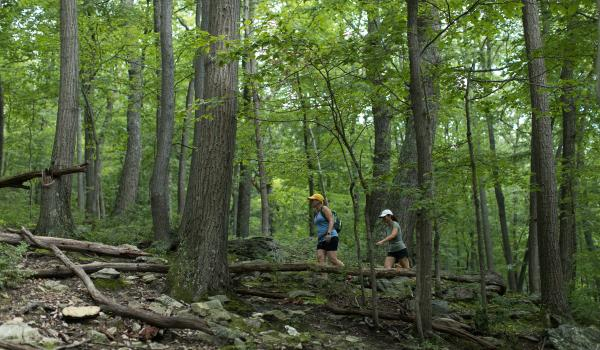 Two women hiking among the trees at Catoctin Mountain Park