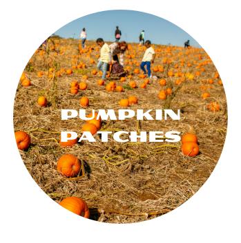 Pumpkin Patches Button