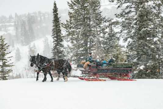 Family in a horse drawn sleigh on a snowy afternoon