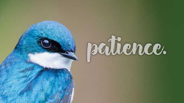 Northern Virginia Birding & Bird Identification | Fairfax