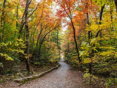 Great Tours for Fall in Asheville, NC
