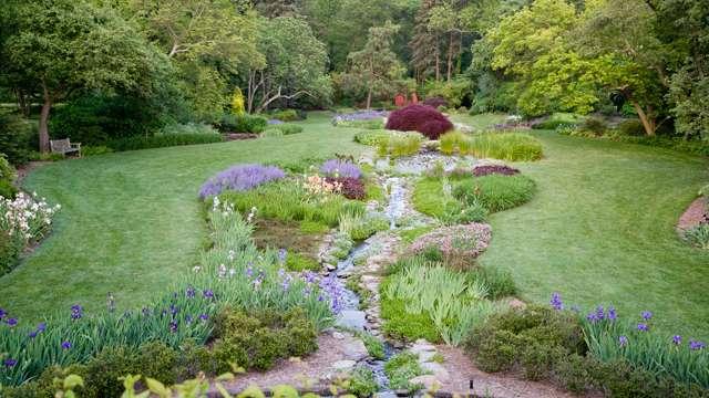 Beautiful flowers in the Iris Garden at Ladew Topiary Gardens