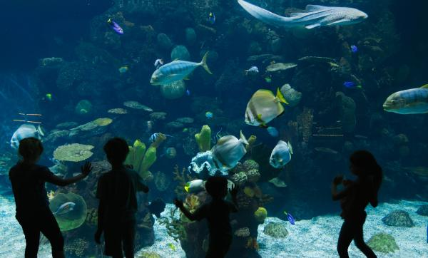 Kids looking through the glass at the Columbus Zoo's Aquarium