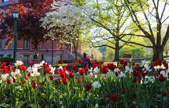 Herman B Wells Statue behind a sea of tulips