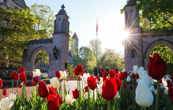 Tulips in the morning sunshine in front of Sample Gates