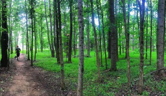 Hiking at Brumley Preserve
