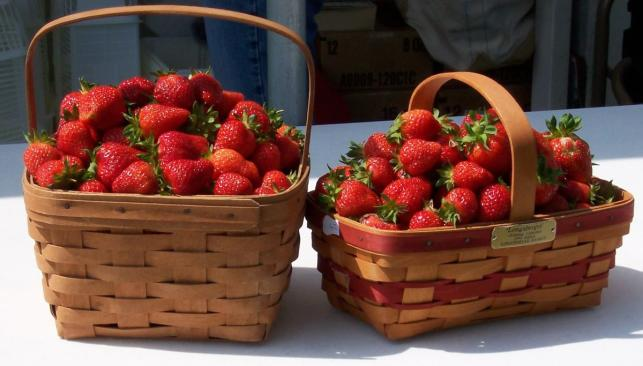 Baskets of Strawberries at Brookdale Farms