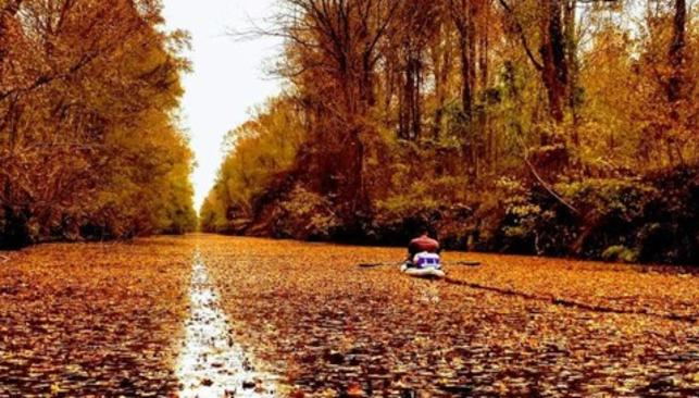 Fall Leaves on Dismal Swamp Canal
