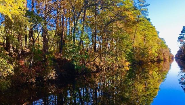 Trees reflect on the water of the Dismal Swamp Canal near Chesapeake, VA