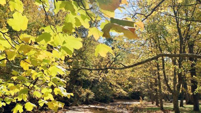 Leaf-peepers, get ready for spectacular fall season