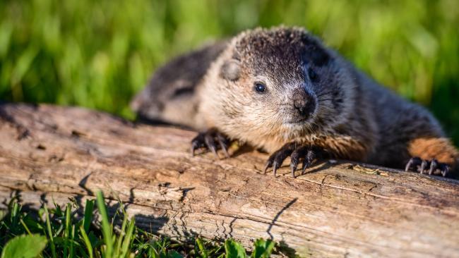 Groundhog Day in the Laurel Highlands