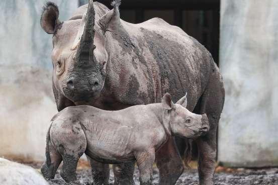 Rhino_Potter Park Zoo