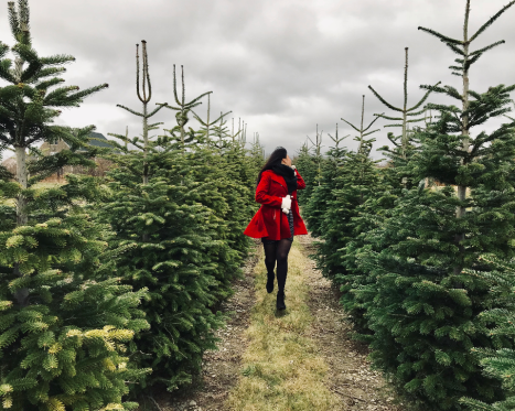 Pick-Your-Own Tree Farms