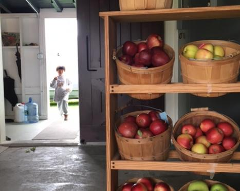 Pick-Your-Own Orchards