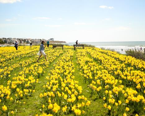 Newport Daffodil Days