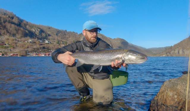 A big sea trout in Lenefjorden, Lyngdal