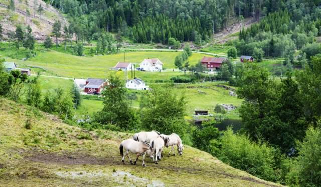 Hester på beite - Eikerapen Gjestegard - Eikerapen i Åseral -