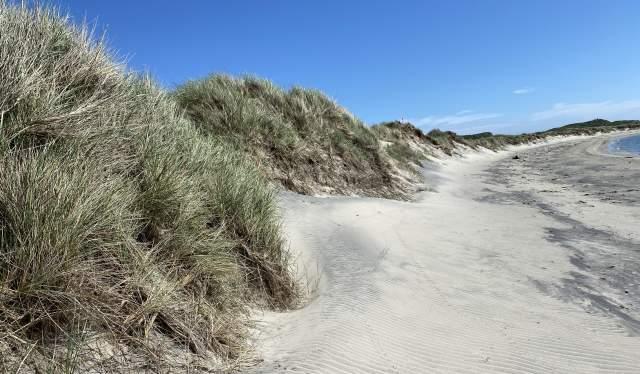 Hvite sanddyner dekket av marehalm. Husebysanden, Lista